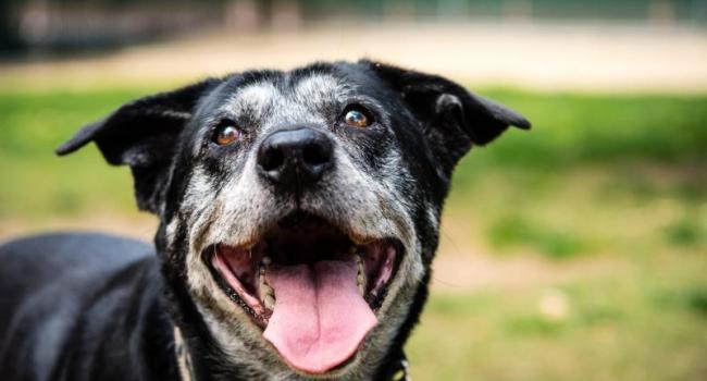 Positive Pets Palmerston - Barking Dogs Information Session